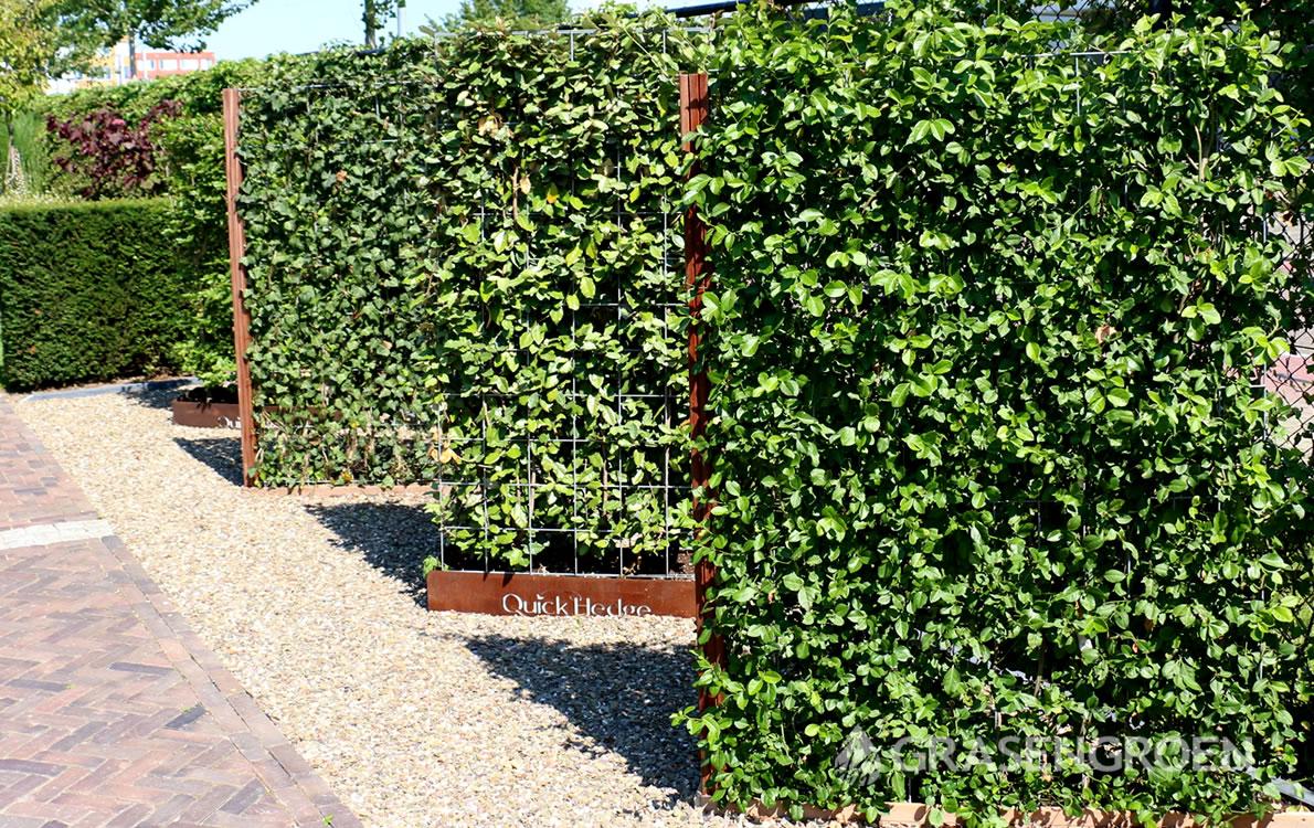 Kantenklaarhaag1 • Gras en Groen Kunstgras